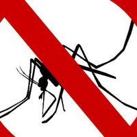 Guide de survie anti-moustiques