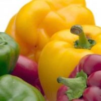 Zoom sur : les fruits et légumes du mois d'aout