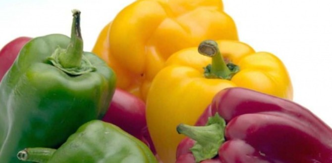 Zoom sur les fruits et l gumes du mois d 39 aout so what - Fruits et legumes aout ...