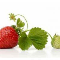 Mes recettes à la fraise