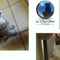 Des (jolis) chats toulousains à aider avec L'École Du Chat Libre de Toulouse