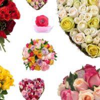 [Test]  Si vous étiez une rose, de quelle couleur seriez-vous?