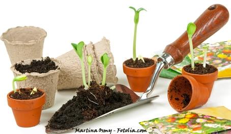 F vrier au jardin so what - Quoi planter en hiver ...