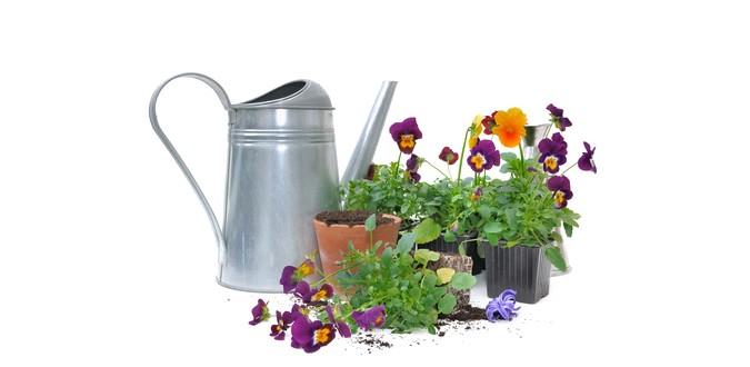 Janvier au jardin so what Jardinage en janvier