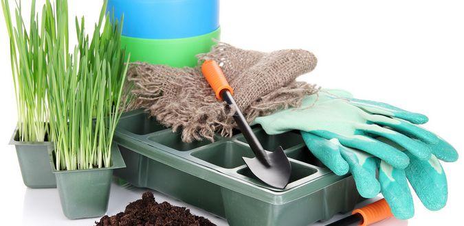dossier jardinage pour d butantes so what. Black Bedroom Furniture Sets. Home Design Ideas