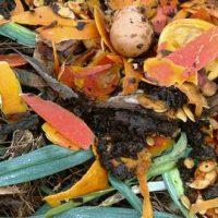 18 ingrédients étonnants à ajouter au compost