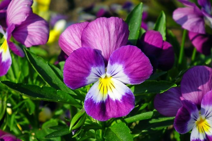 8 plantes qui fleurissent en hiver