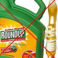 La Commission européenne n'autorisera plus le glyphosate