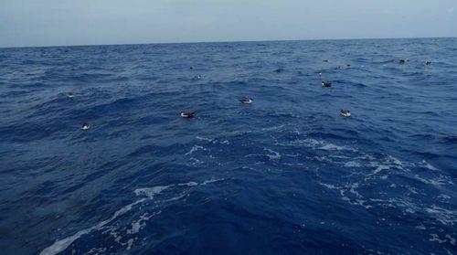 Expédition 7e Continent mer