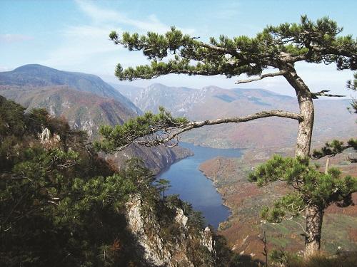 Parc national de Tara - Serbie