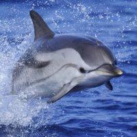 Observer des baleines et dauphins en Méditerranée