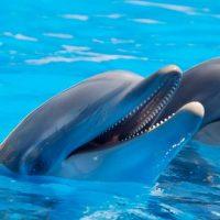 Un nouvel arrêté réglemente les delphinariums