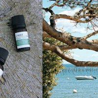 Océopin et Acquadax : entre océan et eau thermale