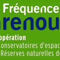 Fréquence Grenouille bat son plein pour sa 24ème édition