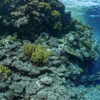 Expo photo : Récifs coralliens, un enjeu pour l'humanité