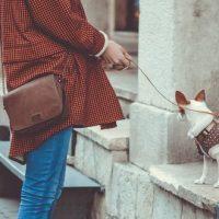 Les 41 villes de France dans lesquelles il fait bon vivre avec son chien
