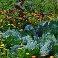 14 (bonnes) associations de plantes au jardin