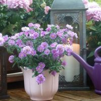 9 idées pour aménager et cultiver sur son balcon / sa terrasse