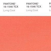 La couleur Pantone 2019 est...