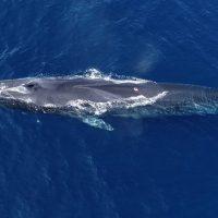 À la rencontre des baleines de Méditerranée avec WWF