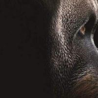 Évolution – La grande histoire du vivant
