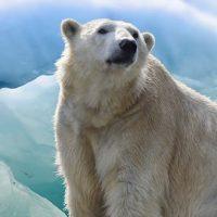 WWF lance un Appel pour la Nature