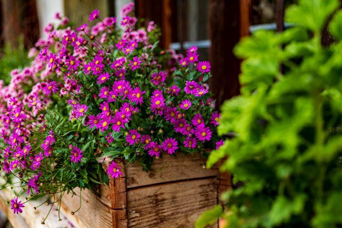 décoration balcon fleuri