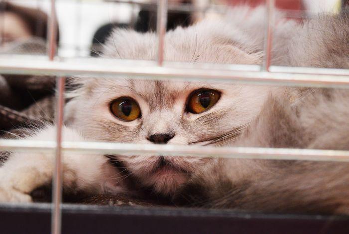chat du refuge