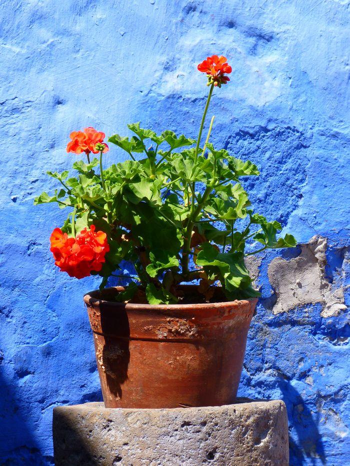 decoration balcon fleurs couleurs