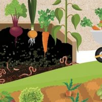 Je fais mon compost – Allan Shepherd
