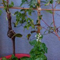 DIY: créer un treillage pour les plantes grimpantes