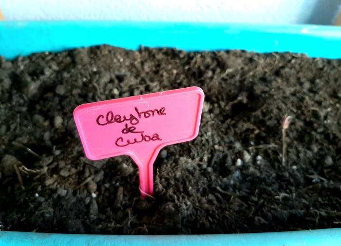 claytone de cuba