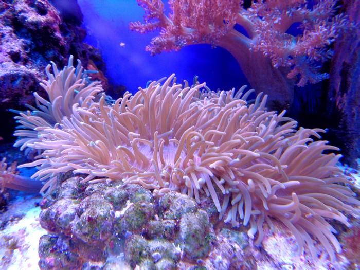 Un geste pour la planète : adopter un corail