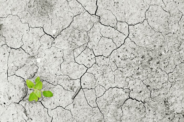 Comment la destruction de la planète est-elle liée à l'émergence de nouveaux virus ?