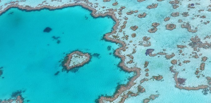 La Grande Barrière de corail menacée