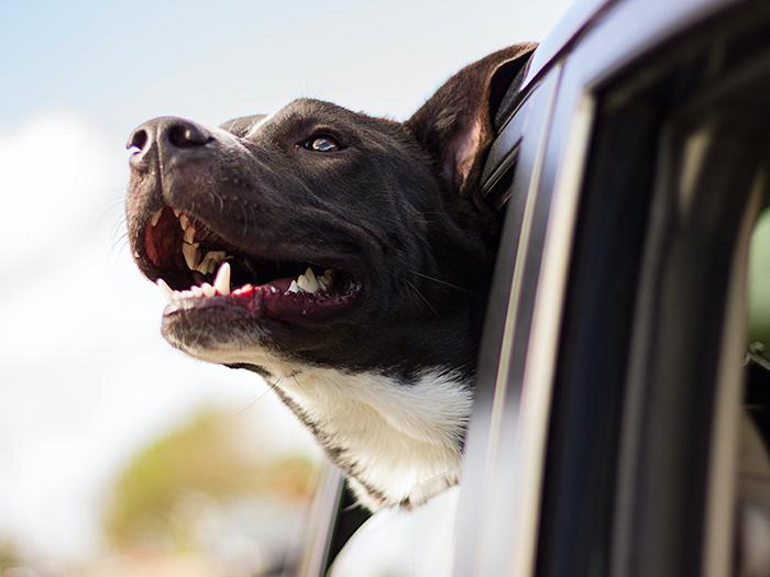 Comment pratiquer l'éducation positive avec son chien ?