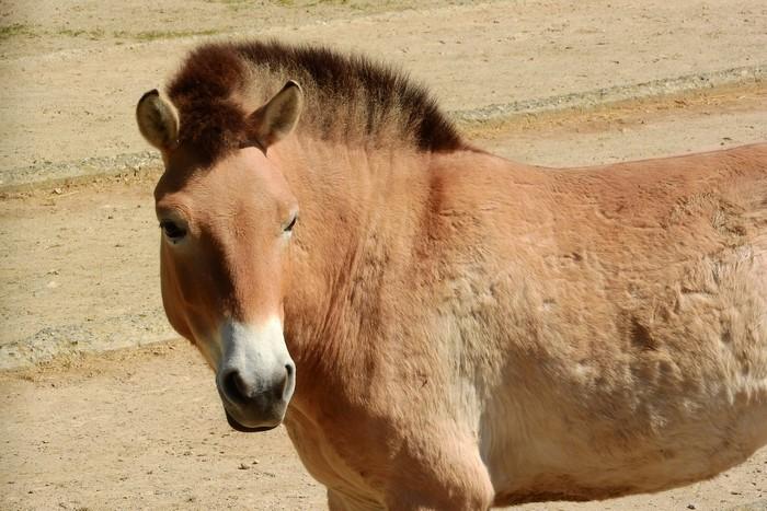 10 animaux en voie de disparition