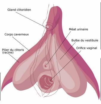 5 choses à savoir sur les stimulateurs clitoridiens