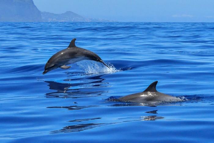 Les dauphins du Parc Astérix ne seront pas remis en liberté
